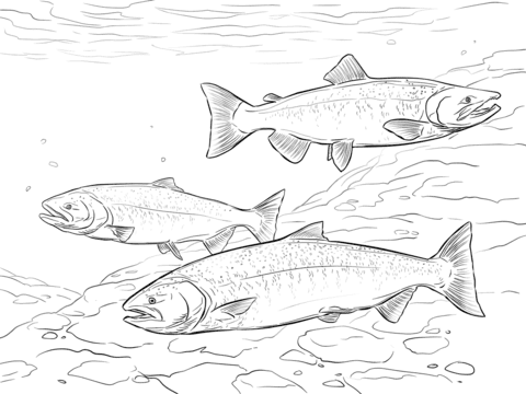 Chinook Salmon Coloring Pages | Super coloring pages ...