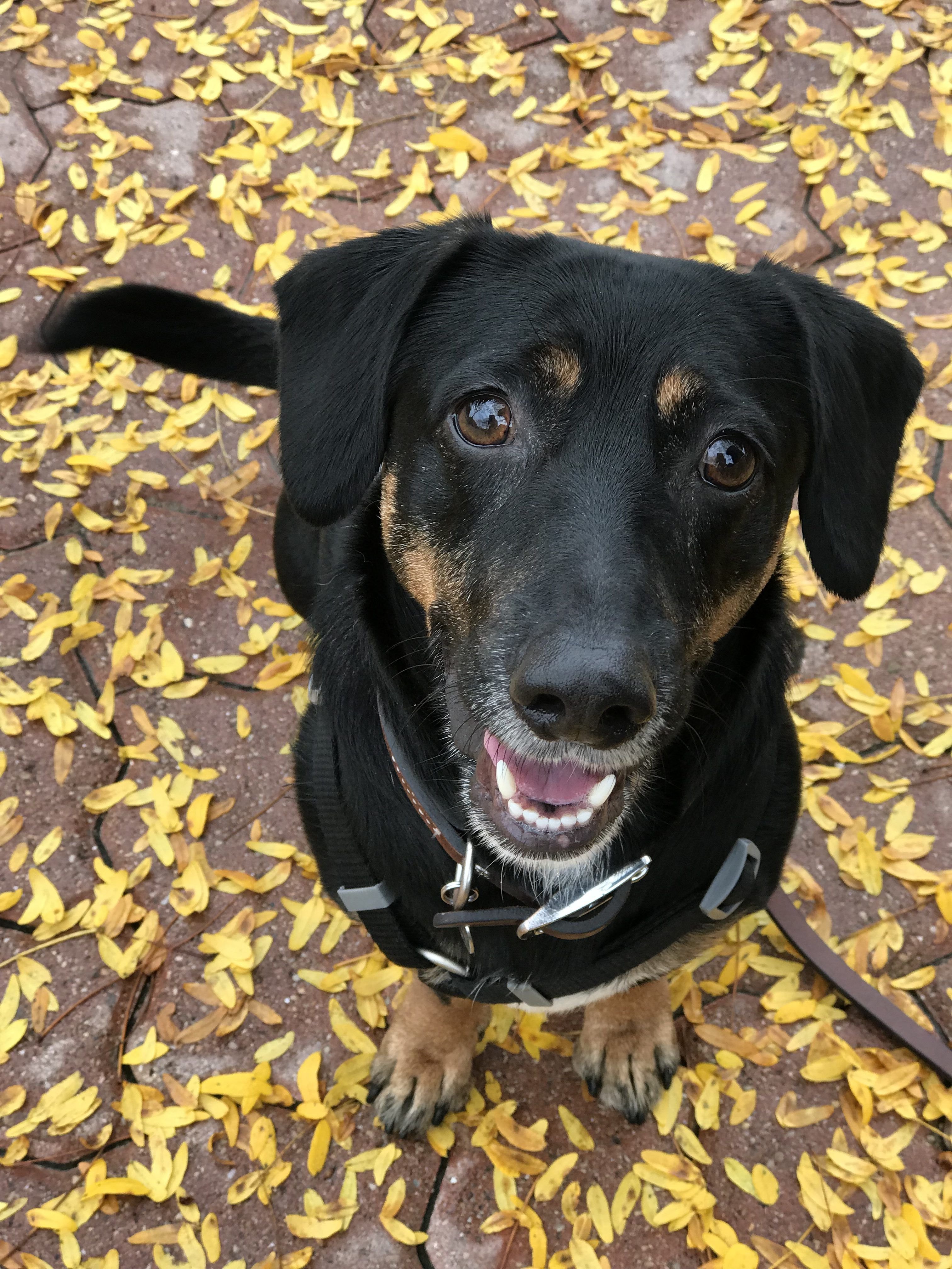 Lessons from a Rescue Dog Rescue dogs, Dog training tips