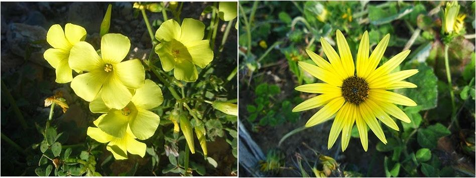Las flores silvestres amarillas más bellas del mundo | Plantas | RED ...