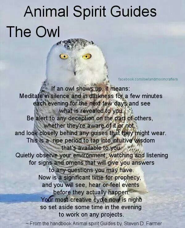 Snowy Owl Of My Protectorstotems My Native Roots