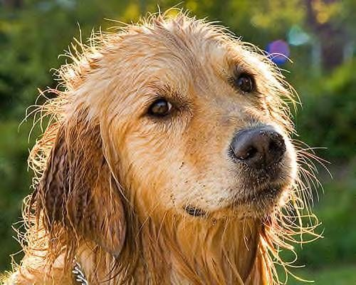 I May Be Wet And Smelly But I M Still Adorable And You Cannot