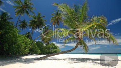This beautiful beach destination in the Caribbean. A blue sky forms the backdrop with the sandy beach and a lone palm forming the main scene. HD Stock Footage Clip. Wide shot. 2010-03-26, MALDIVES.