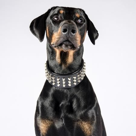 Pin On Bestia Leather Dog Collars For Big Dogs