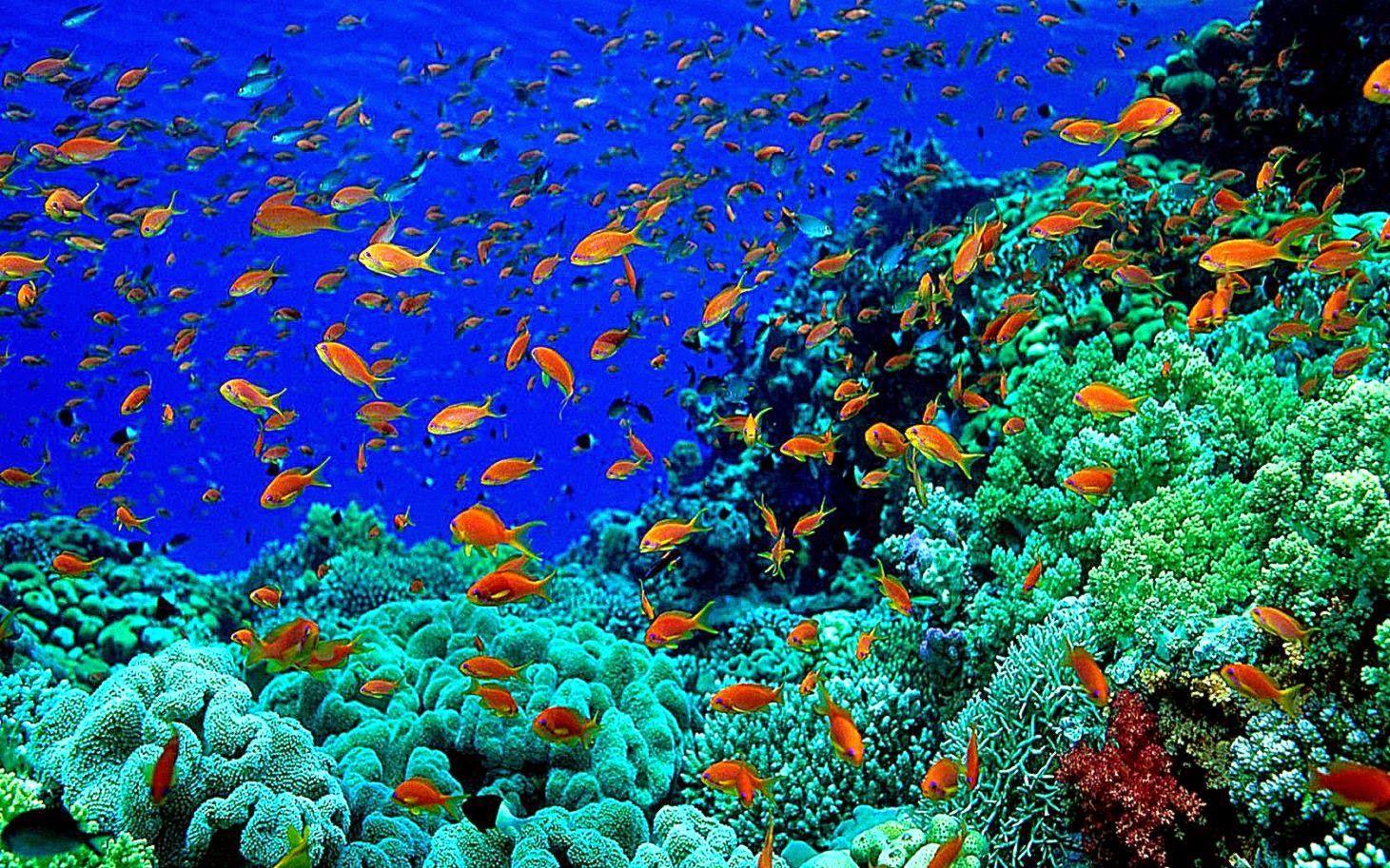 Desktop Wallpaper The Spectacle Of Underwater Photography Fish Wallpaper Underwater World Underwater Wallpaper