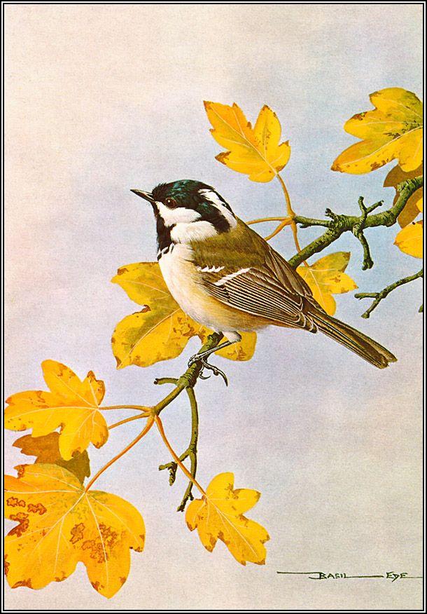 4 часть. Красивые картинки с птицами. | Творческая ...