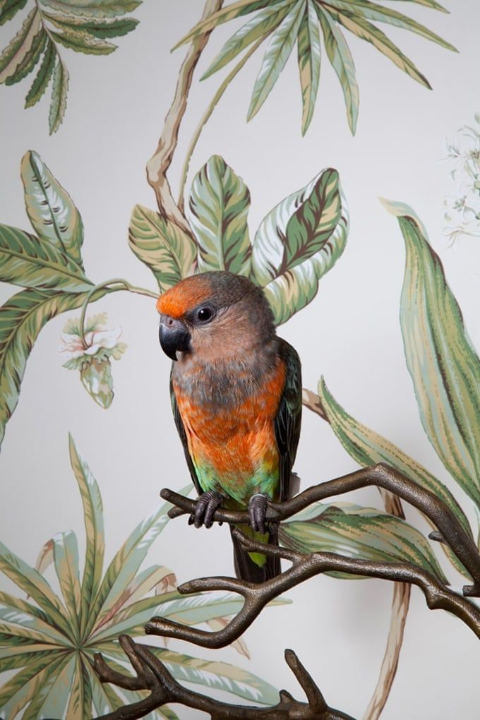 Claire Rosen's birds of paradise in pictures Birds