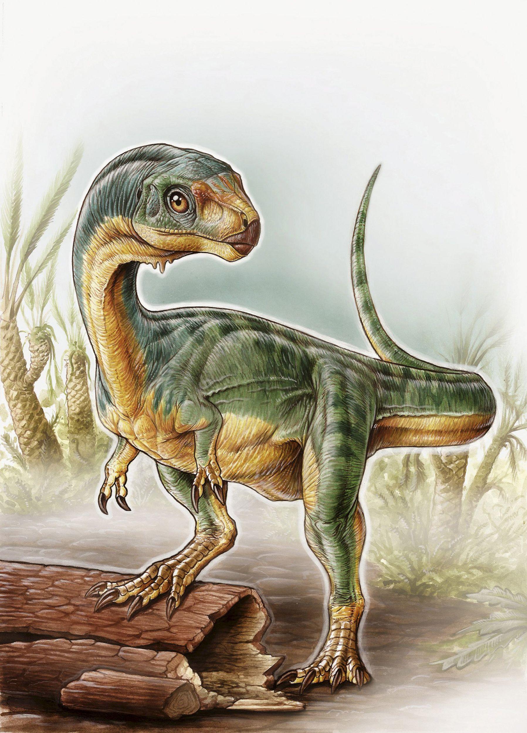 Chilesaurus diegosuarezi, el dinosaurio autóctono de Chile - Cooperativa.cl