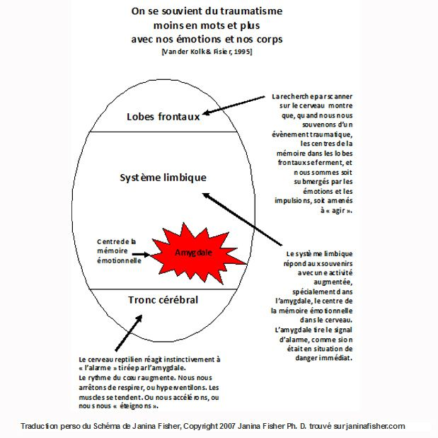 Traduction perso du schema de janina fisher copyright ph  trouve sur janinafisher also best therapy images mental health rh pinterest