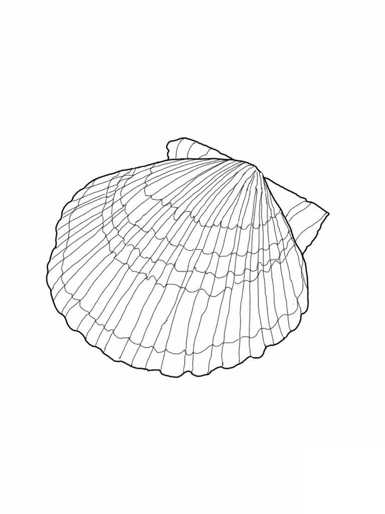 Free Printable Seashell Coloring Pages For Kids | Muster