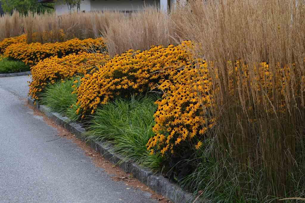 Kombination mit calamagrostis karl foerster rudbeckia for Pflanzengestaltung garten