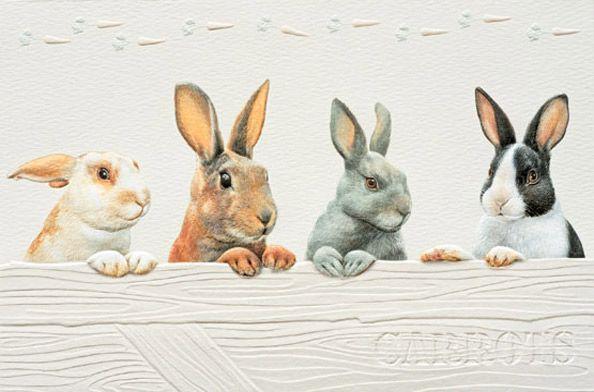 Rabbit Row (TY)