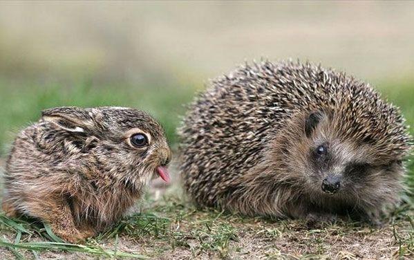 Sassy Bunny, Grumpy Hedgehog - not going to lie, I giggled.