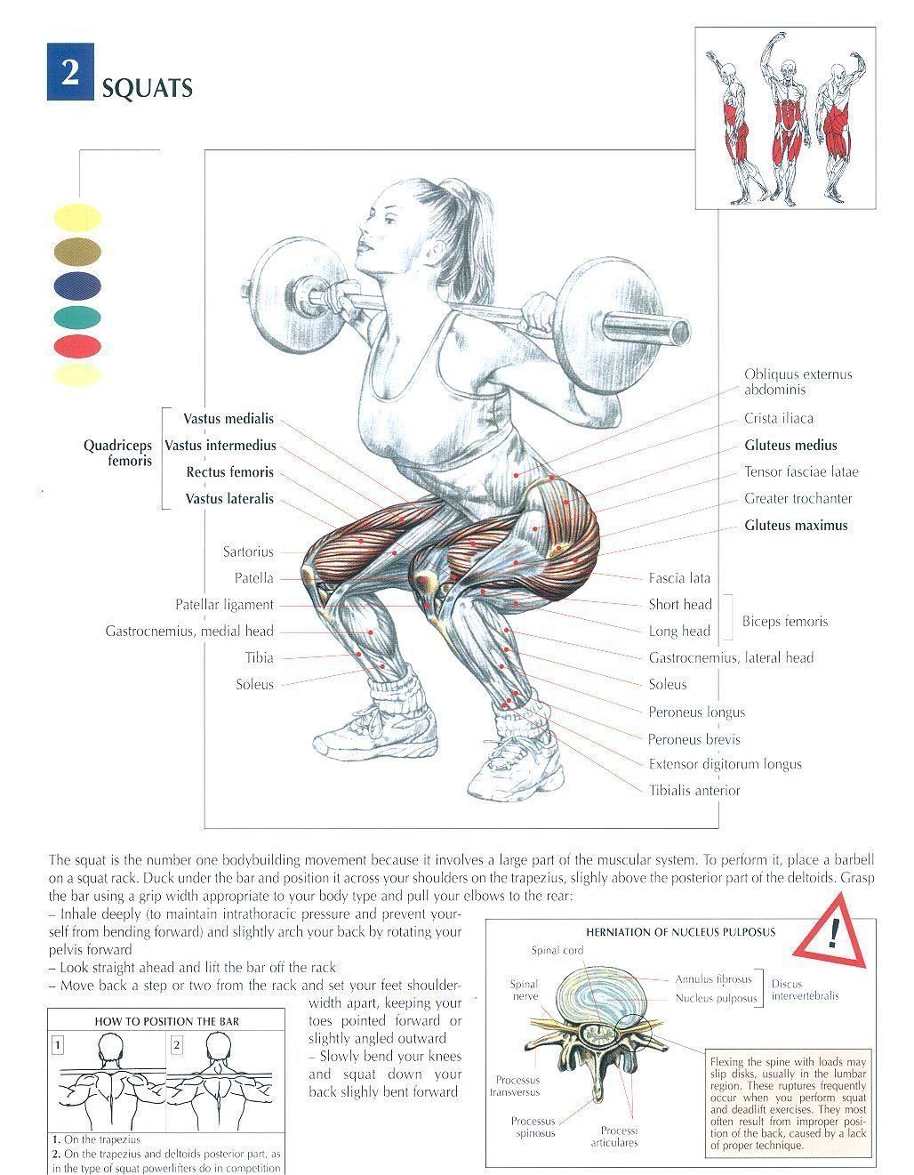 #bodybuilding #exercises #gymsquats #diagrams #fitness #muscles #legs♦ #health #squats #body