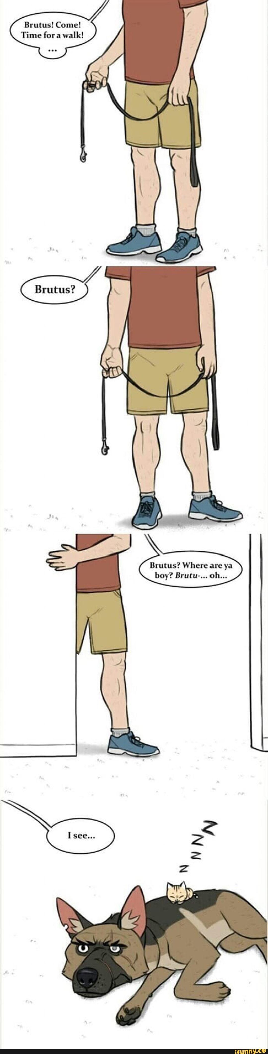 Dog Walk Math Meme