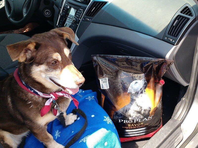 Diy Dog Cooling Mat Easy To Make Dog Cooling Bed And Pad Dog Cooling Mat Cool Dog Beds Diy Dog Stuff
