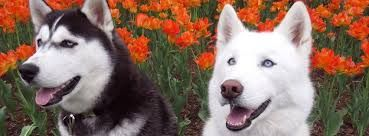 Uconn Huskies Mascots Jonathan Xiv Left And Jonathan Xiii