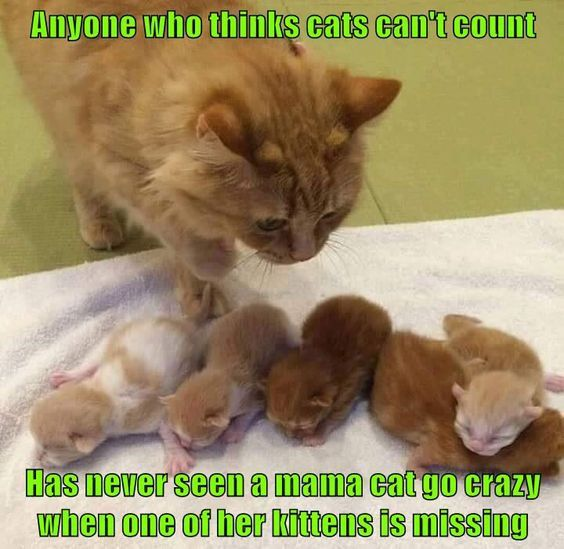 Catsmemes Funny Animal Pictures Cat Memes Just Like Cat Funniest Animals Cat Fun Cat Funny Cat Cats Cat Cute Cat Memes Cute Animals Kittens