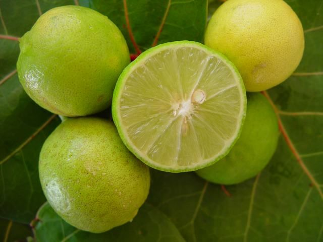 Lime, Citrus aurantifolia, Rutaceae (family). Oil produced by expression of the rind or steam distillation of the whole fruit or juice of the fruit. The expressed oil is Phototoxic and should not be used in concentrations of more than 0.7% (3 drops in 25ml), if exposed to the sun or using a sunbed within 12 hours of application. Distilled oil is not phototoxic. ANTISEPTIC, APERITIVE, antidepressant, TONIC (nervous sytem, immune sytem, respiratory system), ASTRINGENT, digestive stimulant.