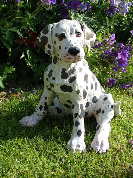 Bullmatian Bullmatians Bulldog Dalmatian Cross Www Dogbreedinfo