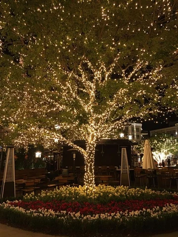 Outdoor Tree Lighting Ideas Christmas