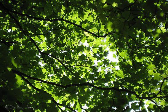 Die Raumfee: Ahornblätterdach // Maple leaves roof