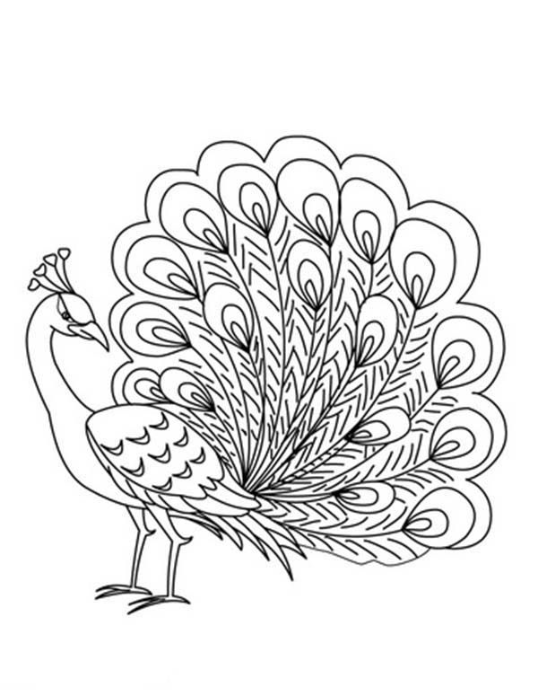 Peacock An Elegant Peafowl Male Peacock Coloring Page An Elegant
