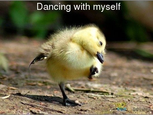 Memes For Very Funny Animals Dance