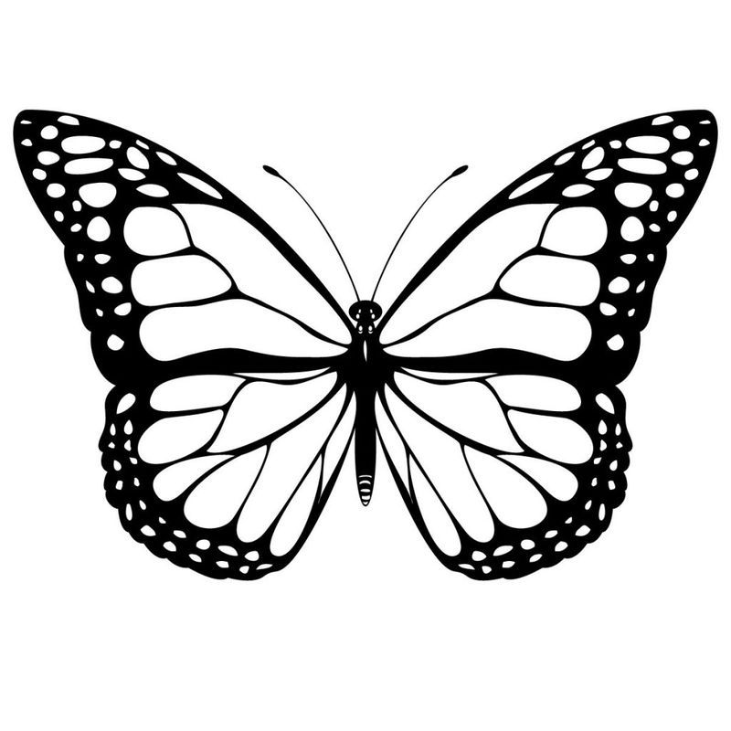 Butterfly Coloring Page Ideas Display