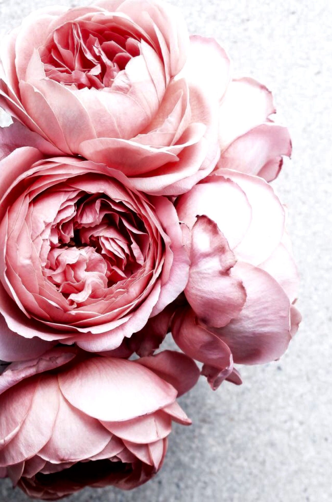 Insta And Pinterest At Amymckeown5 Fiori Flowers Peonies E
