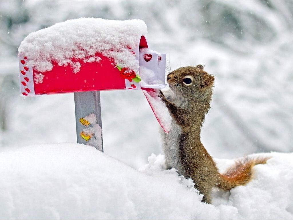 картинки красивые прикольные конец зимы видом деятельности компании