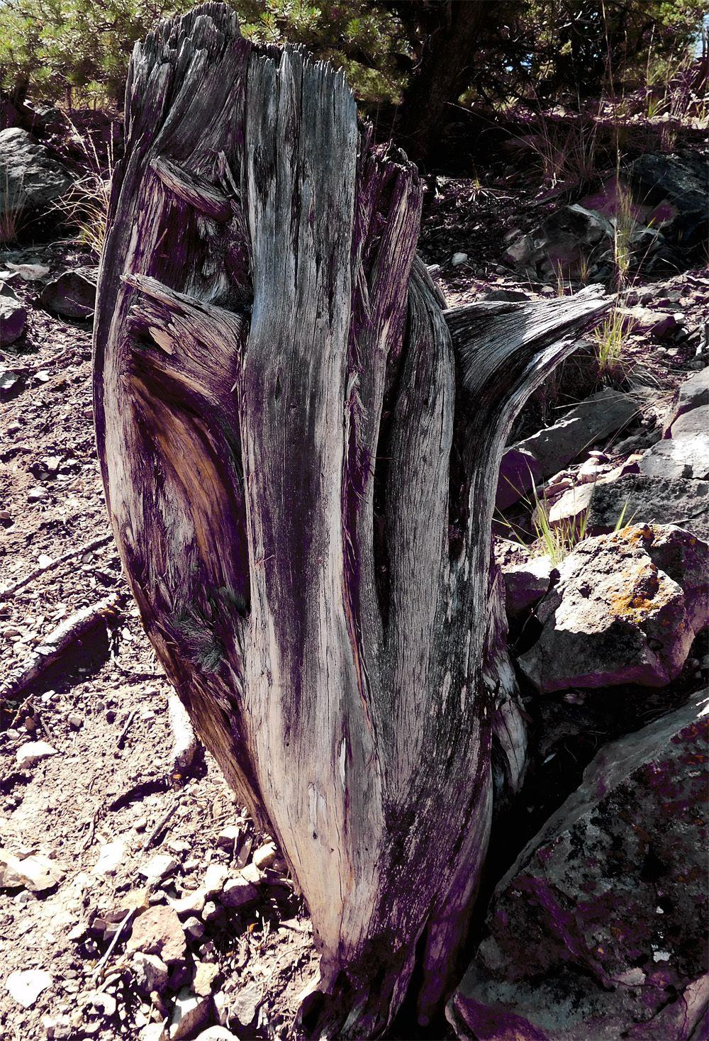 Nature's sculpture - photo by Merik