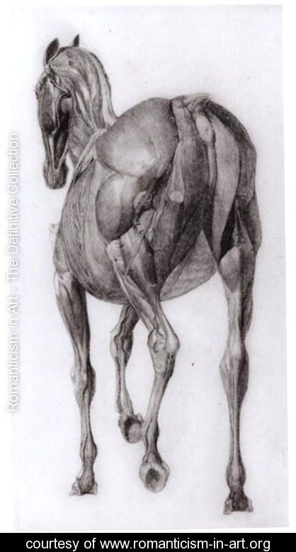 Dorsal view of the muscle structure of a progressively dissected horse, study No.7 from The Anatomy of the Horse, 1766 - George Stubbs - www.romanticism-in-art.org