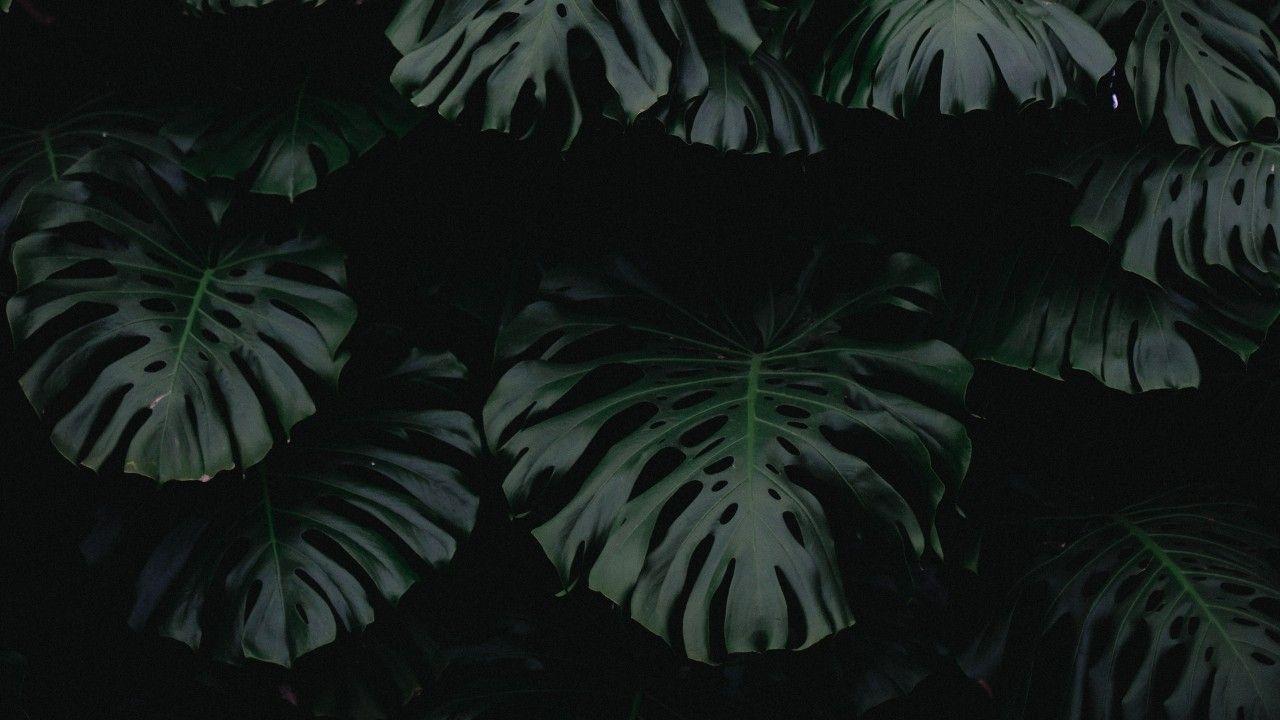 leaf, green, dark, plant wallpapers Plant wallpaper