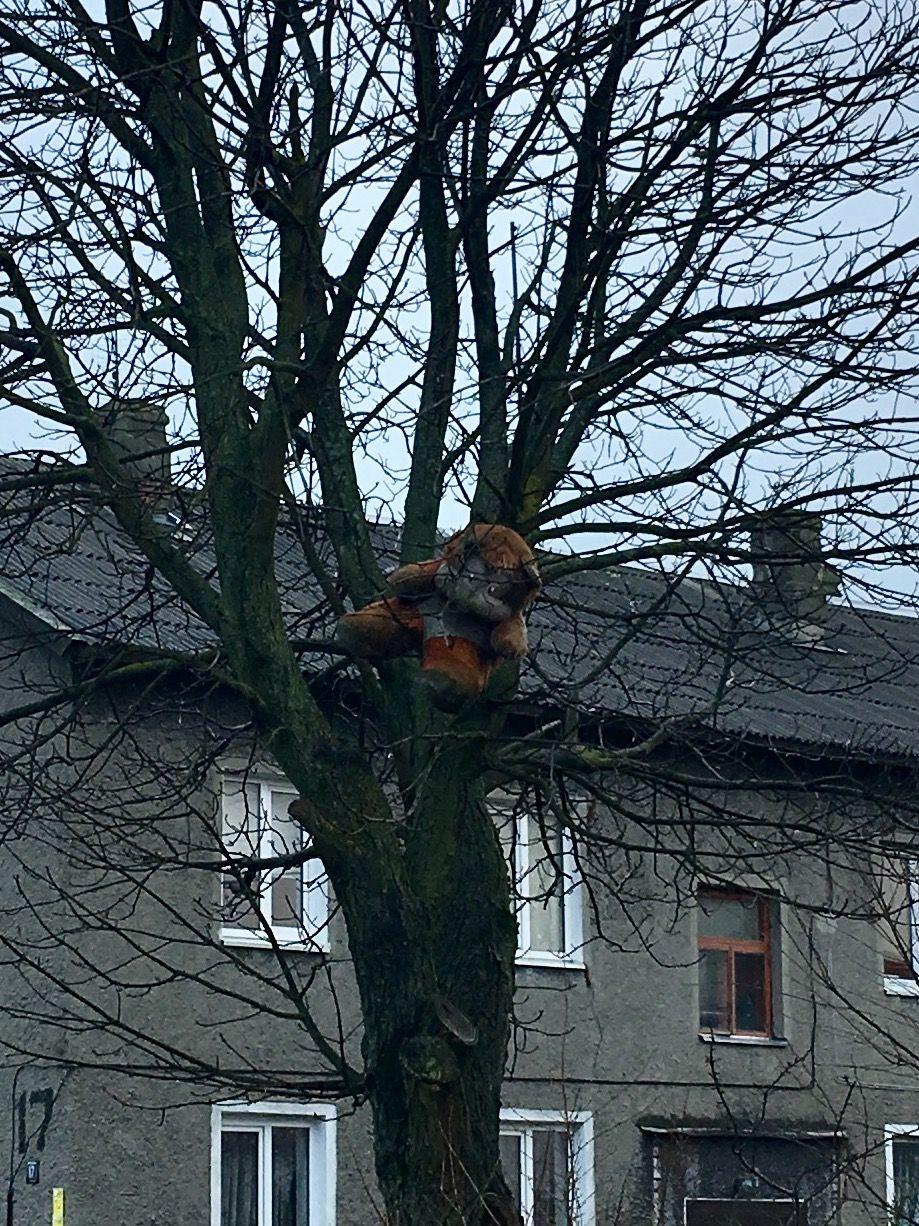 Медведь на дереве.