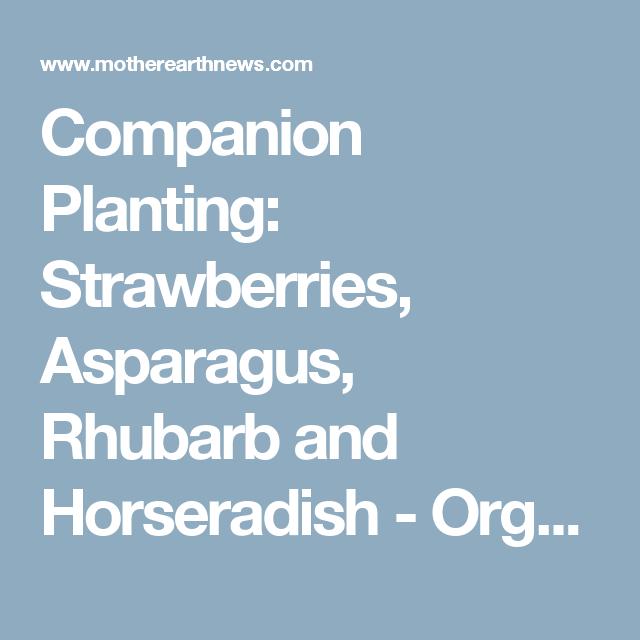 Rhubarb Companion Plants