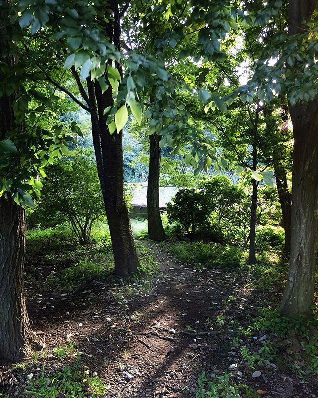 アトリエからの帰り道いつもの池のほとりから少し遠回りすると雑木林のみちというのがあってたまに通って帰ります . ここでは虫や草花木々が優先です . 枝葉の伸び方は不規則でエネルギッシュ 虫の羽音も庭で聞くより心なしか力強く感じます . 久しぶりに通ってみたら木漏れ日は少しオレンジ色に 道にはどんぐり 秋が近づいてきているなぁと感じました . PICは雑木林のみちの入り口です . . #ウェディングブーケ#ウェルカムボード#髪飾り#オーダーメイド#大人婚#結婚式#ナチュラルウェディング#前撮り#後撮り#フォトウェディング#2018冬婚#2018秋婚#2019春婚#両親贈呈品#花のある暮らし#花ギフト #新築祝い#結婚祝い#アーティフィシャルフラワー#造花#コスモス #雑木林 #木漏れ日 #dsfloral #woods #forest#flowerstagram#airaka#アイラカ
