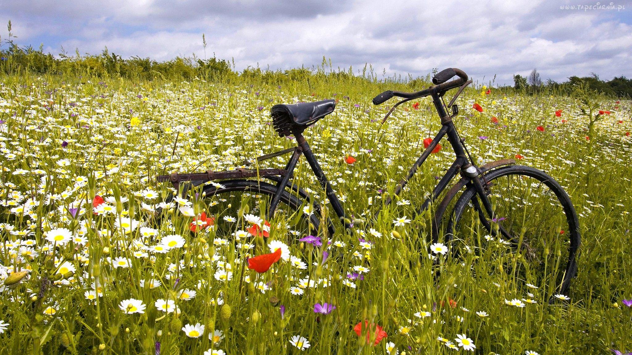 Laka Kwiaty Rower Bicycle Wallpaper Bicycle Nature Wallpaper