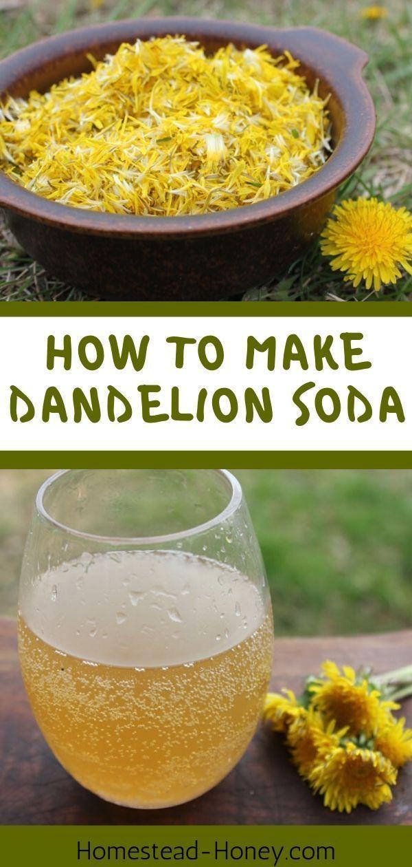 Dandelion Soda Recipe Naturally Fermented With A Ginger Bug Recipe In 2020 Soda Recipe Dandelion Recipes Fermentation Recipes