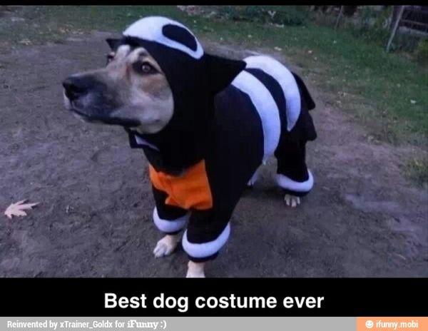 Pokemon Dog Costume Best Dog Costumes Dog Pokemon