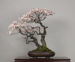 Omoi-no-mama, Omiya Bonsai Art Museum. #bonsaiplants