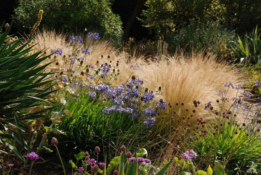 Grosse Gräser gräser spielen auch im garten beth chatto eine große rolle
