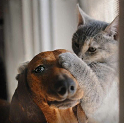 I love any photo of doxies and kitties.