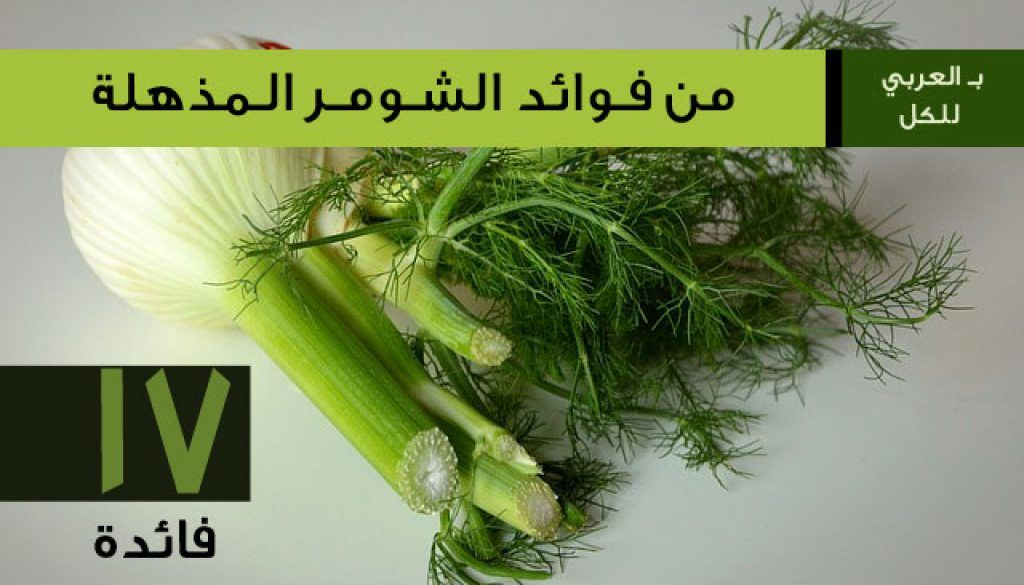 فوائد الشومر أو الشمر المذهلة جديدة 17 فائدة بـ العربي Vegetables Celery Food