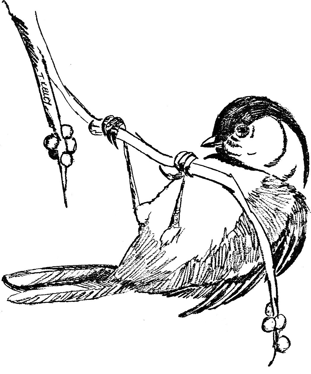 Chickadee Coloring Page Bird Coloring Pages Coloring Pages