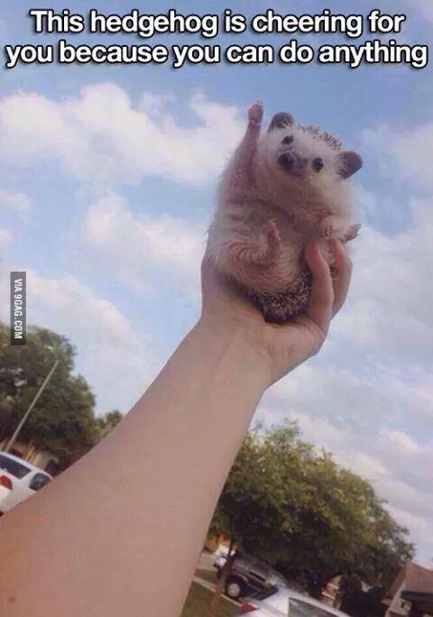 Cheering Hedgehog Funny Animal Pictures Cute Animals Cute Hedgehog