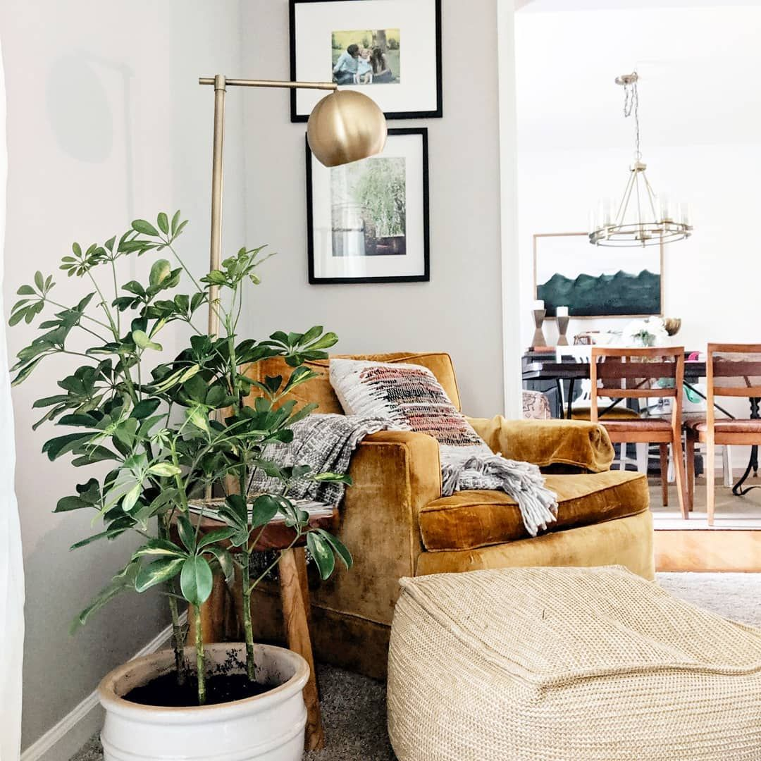 """Diana Forrester Home on Instagram """"Live plants are one"""