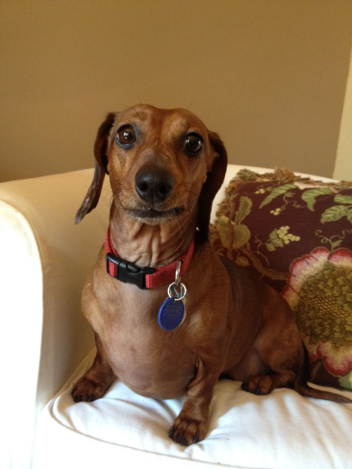 Waiting mans best friend rottweiler names animal rescue