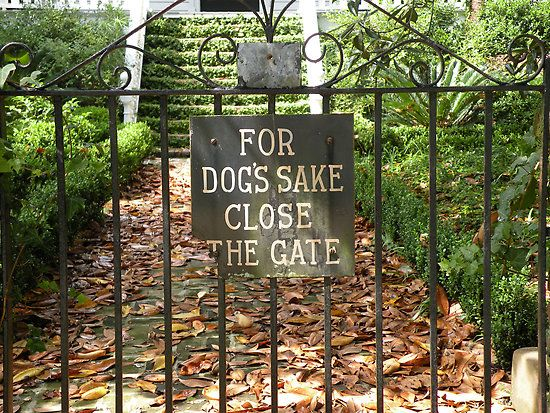 For Dog S Sake Close The Gate By Trish Meyer Dogs Of The World Gate Signs Dog Gate