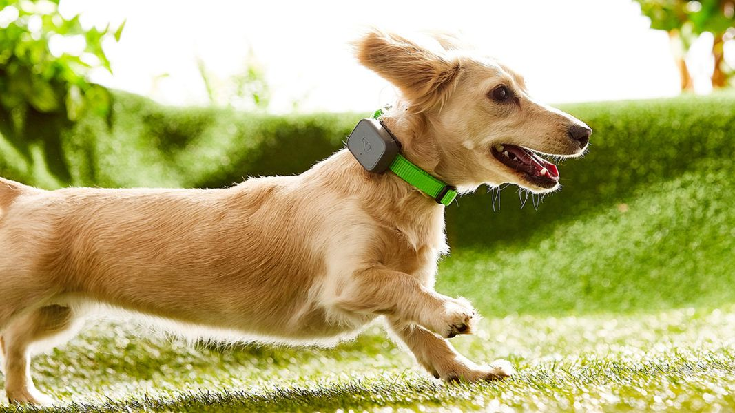 How Much Exercise Does My Dog Need? Dogs, Overweight dog