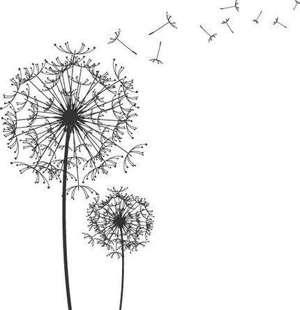 Dandelion Sketch Drawing Google Search AFU Ideas
